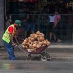 Kokosnüsse sind überall erhältlich.